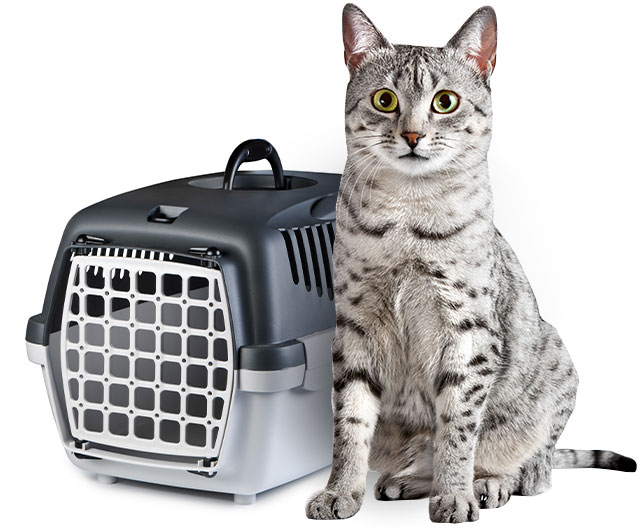 cat with crate
