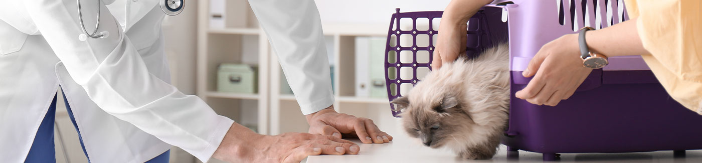 getting your cat to the vet