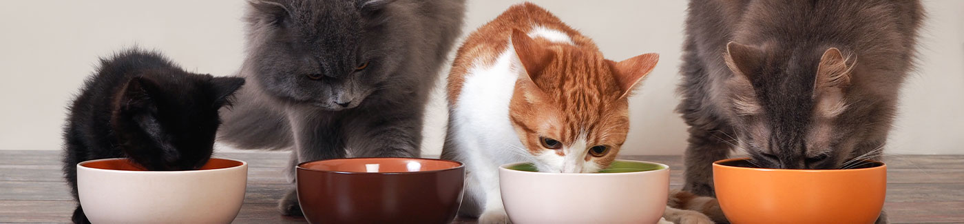 picky cats eating